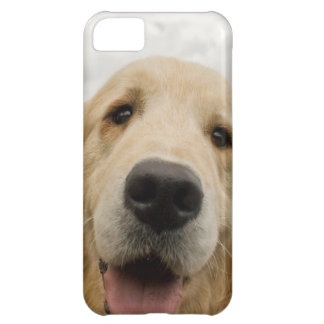 Happy Golden Retriever iPhone 5C Cover