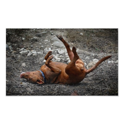 Happy Goofy Chocolate Lab Pit Mix Dog 3 Photo Print