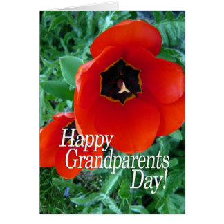 Happy Grandparents Day - Poppy Flowers Greeting Card