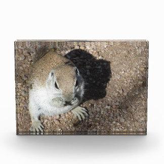 Happy Ground Squirrel Award