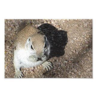 Happy Ground Squirrel Photo Print