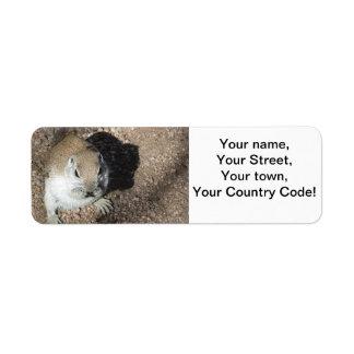 Happy Ground Squirrel Return Address Label