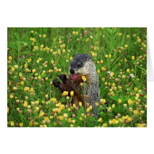 Happy Groundhog Day Card!