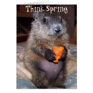 Happy Groundhog Day Card with Baby Maude