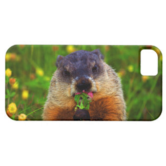 Happy Groundhog Day Eating Flower iPhone 5 Covers