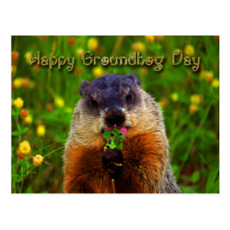 Happy Groundhog Day Eating Flower Postcard