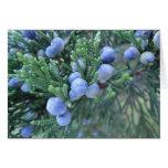 Happy Hanukkah: Juniper Berries Card