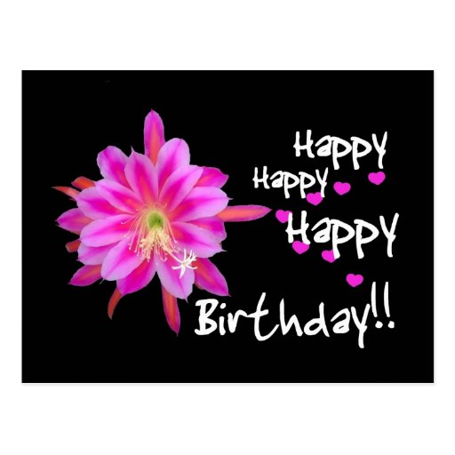 Happy Happy Happy Birthday - Pink Tropical Flower Post Cards