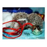 Happy Hedgehog Holidays Postcard