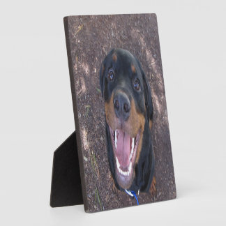 Happy Heidi Rottweiler Photo Plaque