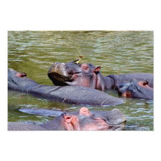 Happy Hippos Photo Print