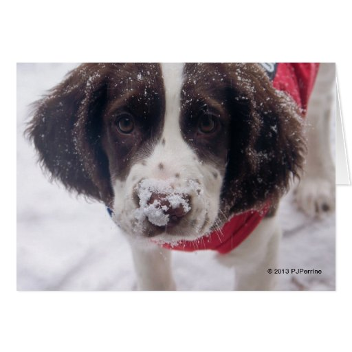 Happy Holiday Puppy Love Note Greeting Cards