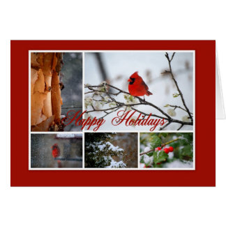 Happy Holidays Cardinal Winter Scenes Collage Greeting Cards