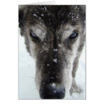 Happy Holidays from Disco Dog IV Stationery Note Card