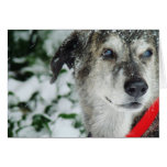 Happy Holidays from Disco Dog Stationery Note Card