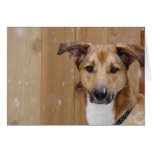 Happy Holidays from Zombie Dog Stationery Note Card