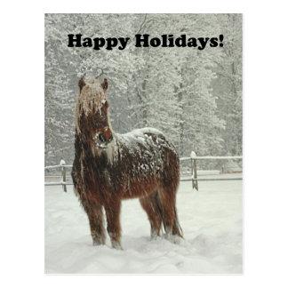 Happy Holidays Icelandic Horse Photo Postcard