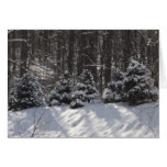 Happy Holidays Snow Covered Evergreen Card