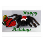 Happy Holidays! ... with a Tarantula? Post Cards
