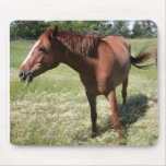 Happy Horse Mouse Pads