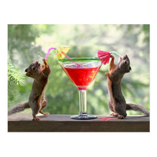 Happy Hour Squirrels Post Card