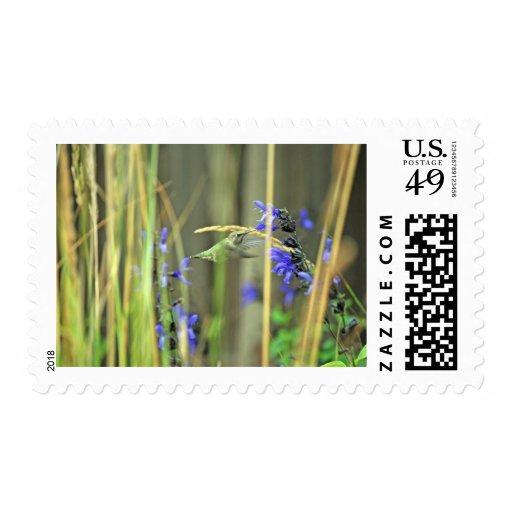 Happy Hummer III Stamp