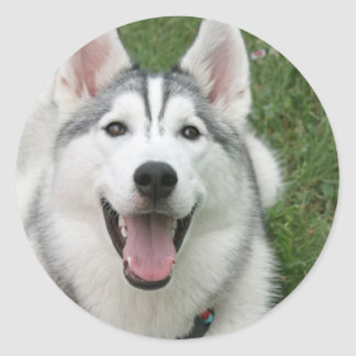 Happy Husky Classic Round Sticker
