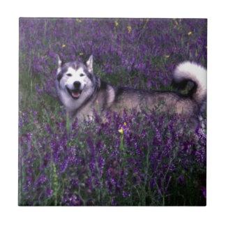 Happy husky dog ceramic tiles
