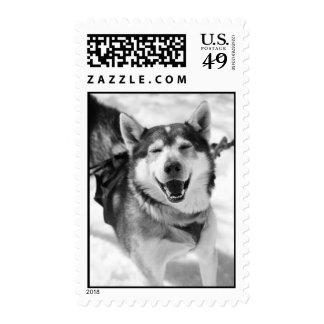 Happy Husky Stamps