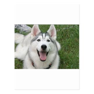 Happy Husky Postcard