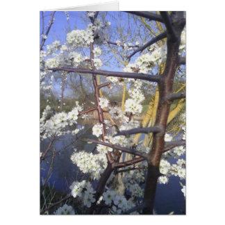 Happy Imbolc (blackthorn blossom) Card