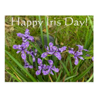 Happy Iris Day! Postcard