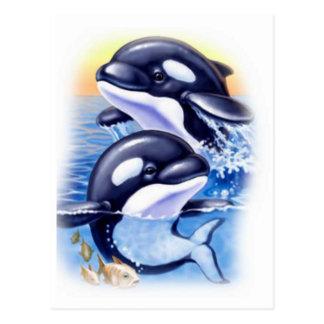 Happy Killer Whales Postcard