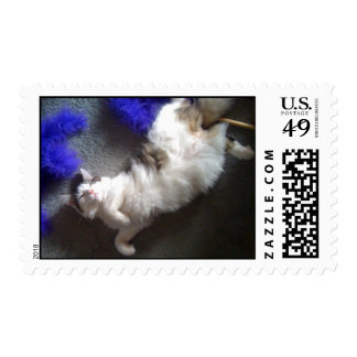 Happy Kitten and her Boa Postage