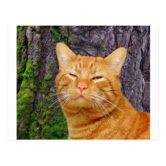 Happy Kitty Kat! Postcard