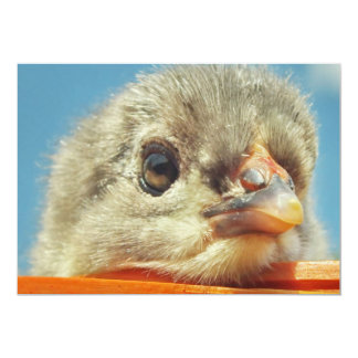 happy little chicken chick card