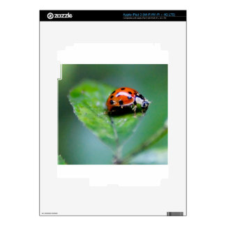 happy lonely lady bug iPad 3 skin