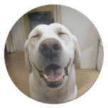 Happy Max ! Dinner Plate