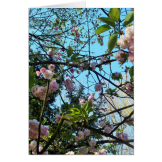 Happy Mother´s Day, Pink Cherry Blossom, Photo Card