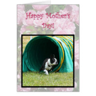 Happy Mother's Day Agility Boston Terrier card