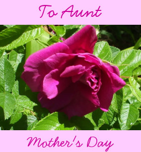 happy mothers day aunt cards zazzle