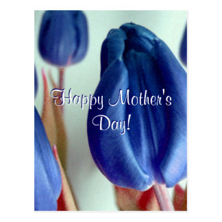 Happy Mother's Day BlueTulips Postcard