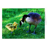 Happy Mother's Day: Canada Goose and Chicks Cards