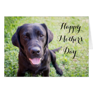 Happy Mother's Day Card with black labrador