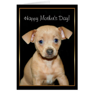 Happy Mother's Day Chihuahua pug greeting card