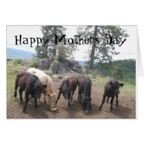Happy Mother's Day   - Cows and calves Card