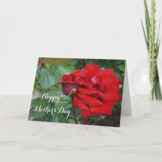 Happy Mother's Day Crimson Bouquet Rose #2 Card