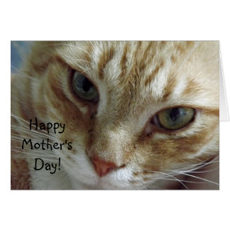Happy Mother's Day from Cat Card