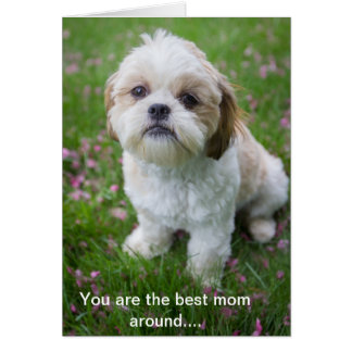 Happy Mother's Day from Edie the Shih tzu Card