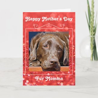 mother's day, mother, fur momma, labrador, pets, template, card, greeting card,